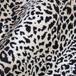 ткани снежный леопард, snow leopardo