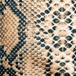 ткани anakonda, змея, анаконда